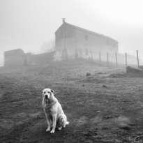 perro entre la niebla