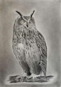 buho real. real owl