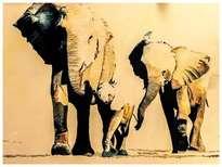 serie elefantes gran jefe