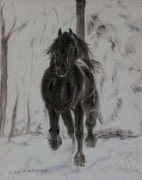 friesan horse in winter