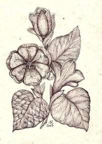 flores del jardín 2