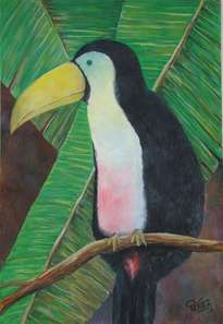 tucan platanero
