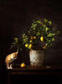 bodegón del gato y el limón