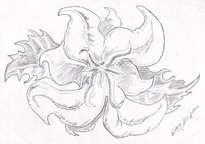 Dibujo. orquidea