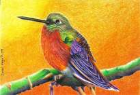colibrí.