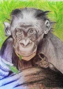 amor de chimpancé