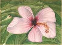 flor de tamarindo