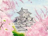 himeji castle, cherry blossom