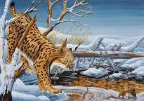 la chasse du lynx