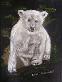 young ice bear