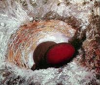 huevo rojo en su habitáculo