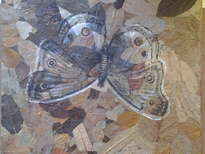 mariposa borboleta