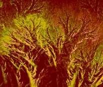 bosque   de  ombues
