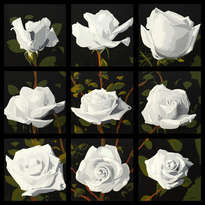 rosal blanco en si bemol mayor