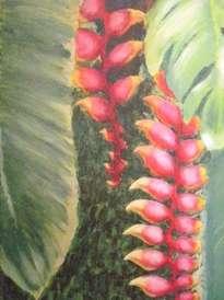 bananeira de jardim