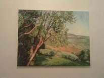 panoramica con eucaliptos
