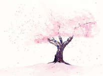 spring in pink , cherry blossom