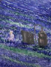 provence: cosecha de lavanda