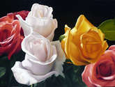 rosas