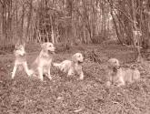amigos perros