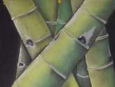 guaduas 07