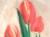 tulipanes