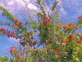 flores bajo un concierto de nubes