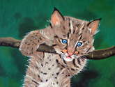 beb lince,luchs-baby,bb lynx