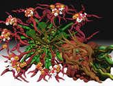 flores raras 1
