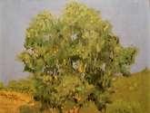 eucalipto a mediodía por pasaje los almendrales