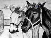 cavalo 2