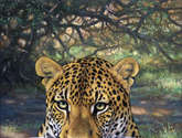 leopardo