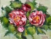 camélias rosas