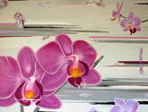 grandes orchides