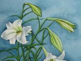 flores antigüeñas