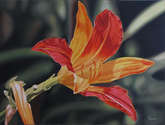 flor del siglo xx
