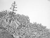 vegetación del garraf con pita