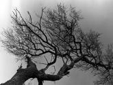 serie árboles - ramas 3