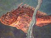 pez en el mediterráneo