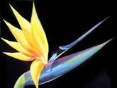 beauty of birds of paradise
