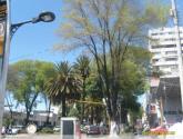 urbanismo semisalvaje