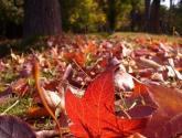 niños de otoño