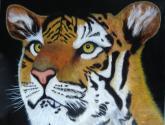 tigre deslumbrado