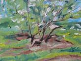 the flowering crab apple tree