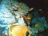 fondo marino 1