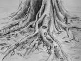 raiz xiv