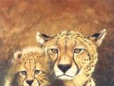 cheetah mother & cub