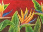 flor del eje cafetero -
