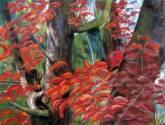ramas con follaje rojo