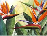 aves del paraiso3